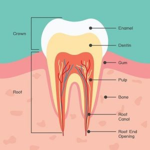 How Much Does a Root Canal Cost